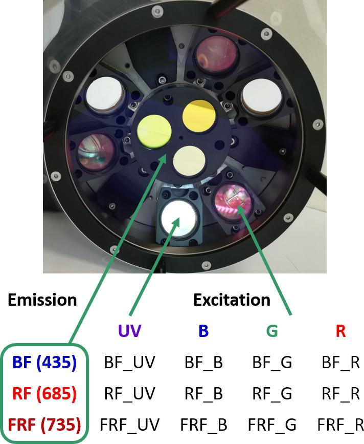 Multiplex fluorescence signals